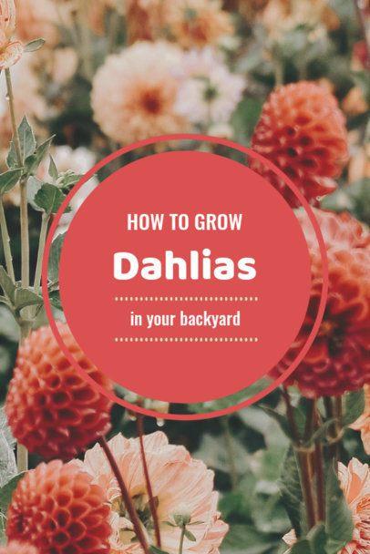 Gardening Advice Pinterest Pin Maker 651d